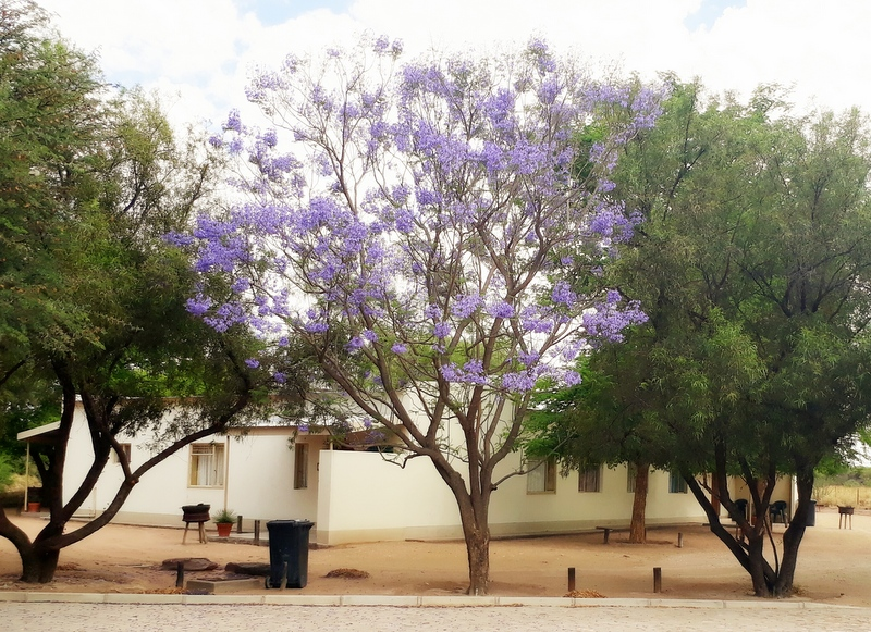 Buitepos accommodation Namibia: 3-Bed Bungalow